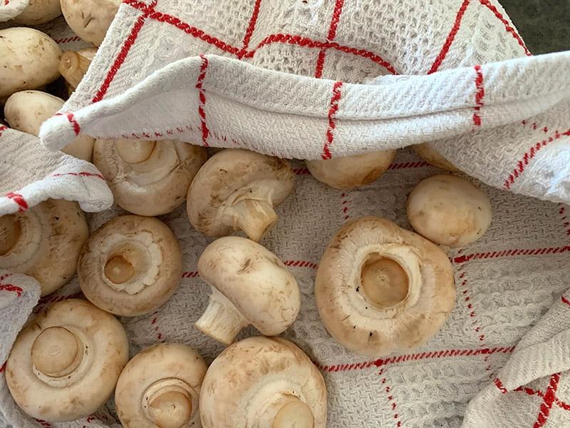 PATTING MUSHROOMS DRY IN A TOWEL