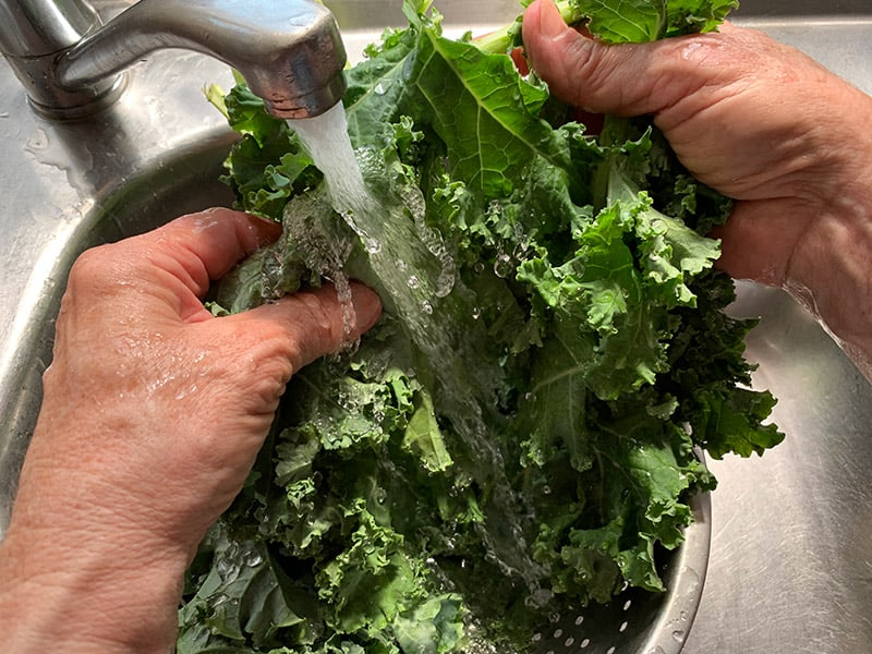 WASHING KALE UNDER COLD RUNNING WATER