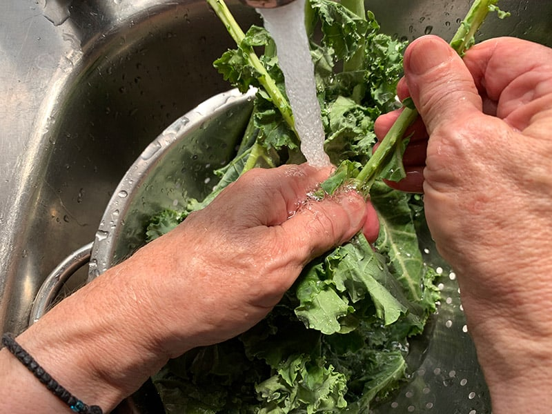 STRIPPING KALE STEMS BY HAND