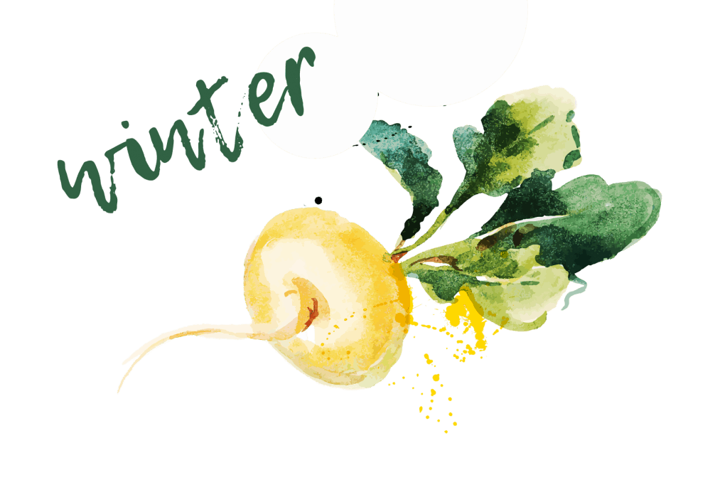 winter title watercolour turnip