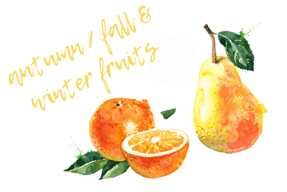 AUTUMN & WINTER FRUIT BANNER