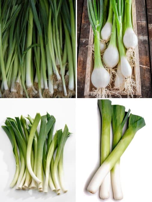 COLLAGE OF GREEN ONION VARIETIES