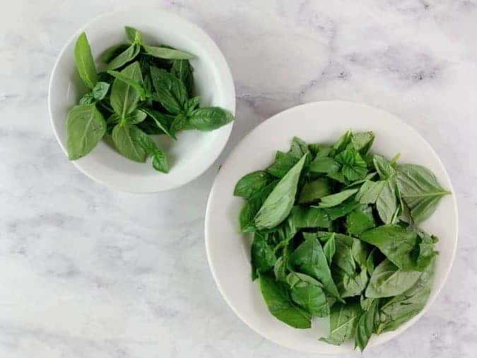 BASIL LEAVES IN TWO WHITE BOWLS