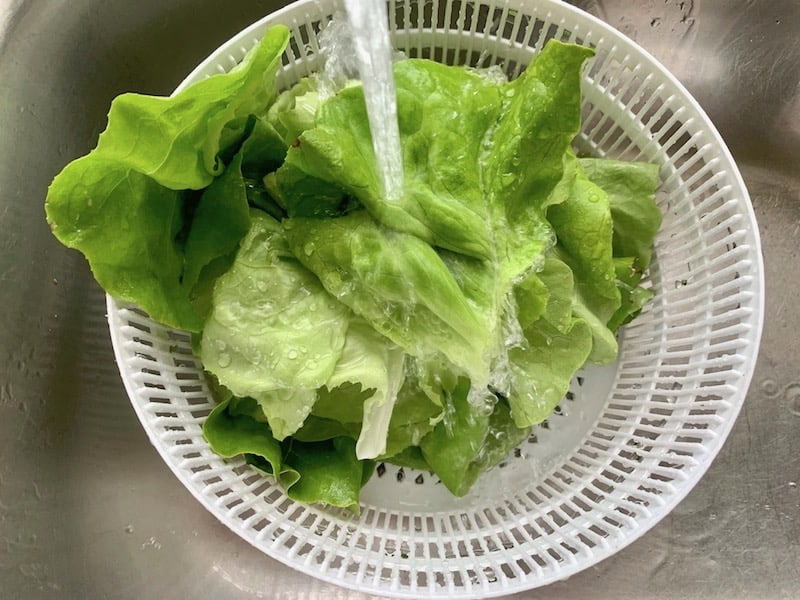 WASHING BUTTER LETTUCE LEAVES UNDER COLD WATER
