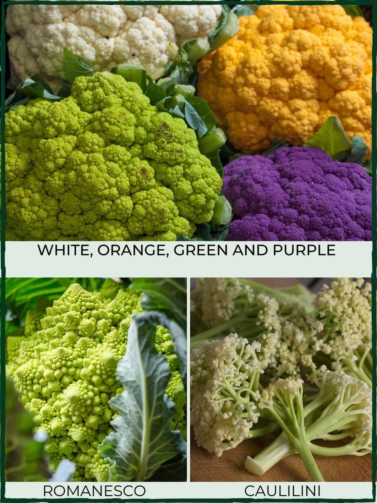 cauliflower varieties - white, orange, purple, green, romanesco & caulilini
