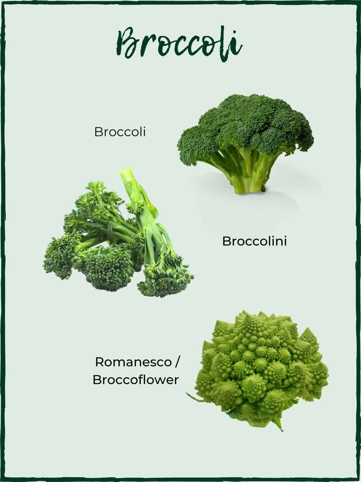 Broccoli varieties