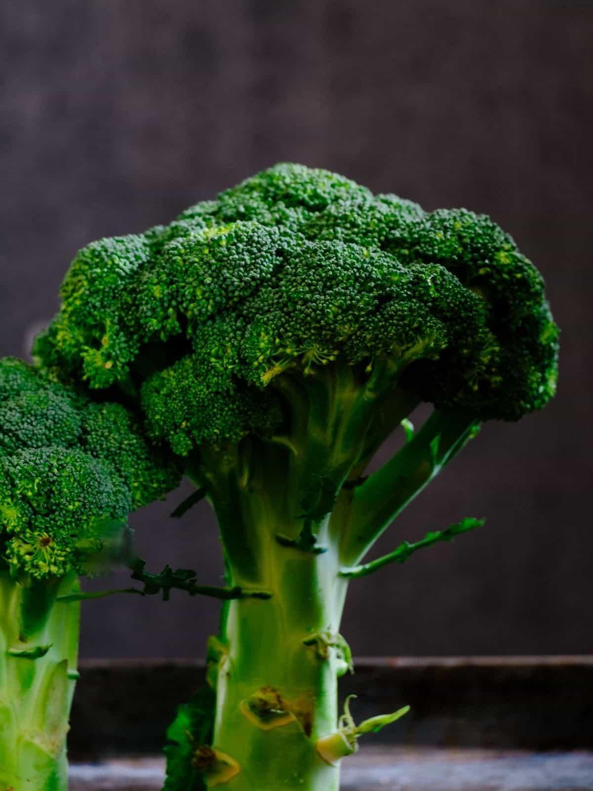 Broccoli wit dark background