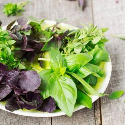 BASIL VARIETIES ON A WHITE PLATE