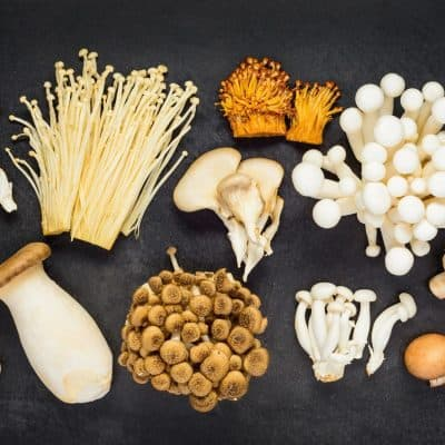 DIFFERENT TYPES OF MUSHROOMS ON A DARK GREY BACKGROUND