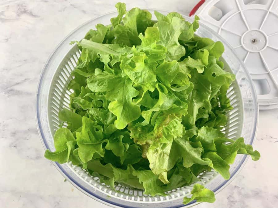 SPINNING LETTUCE DRY IN A SALAD SPINNER