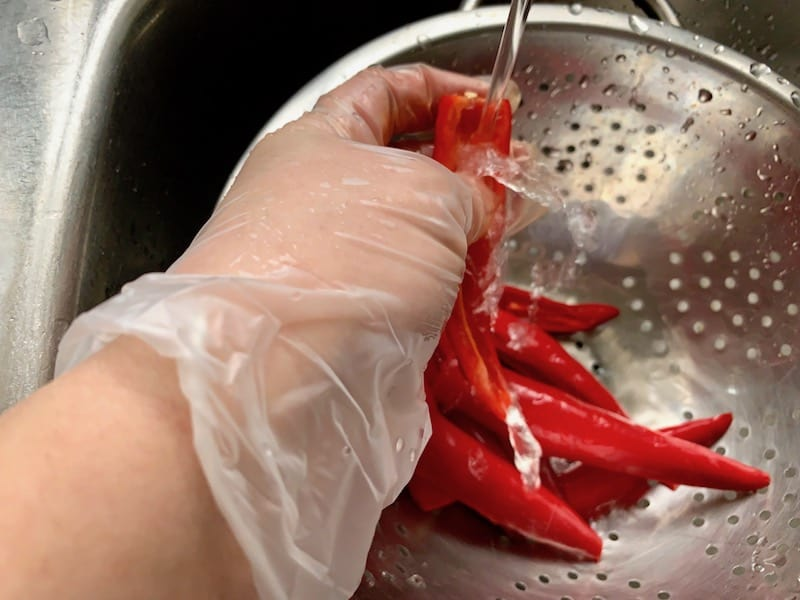 HANDS WEARING GLOVES RINSING CHILLIS IN A COLANDER IN THE SINK UNDER COLD RUNNING WATER