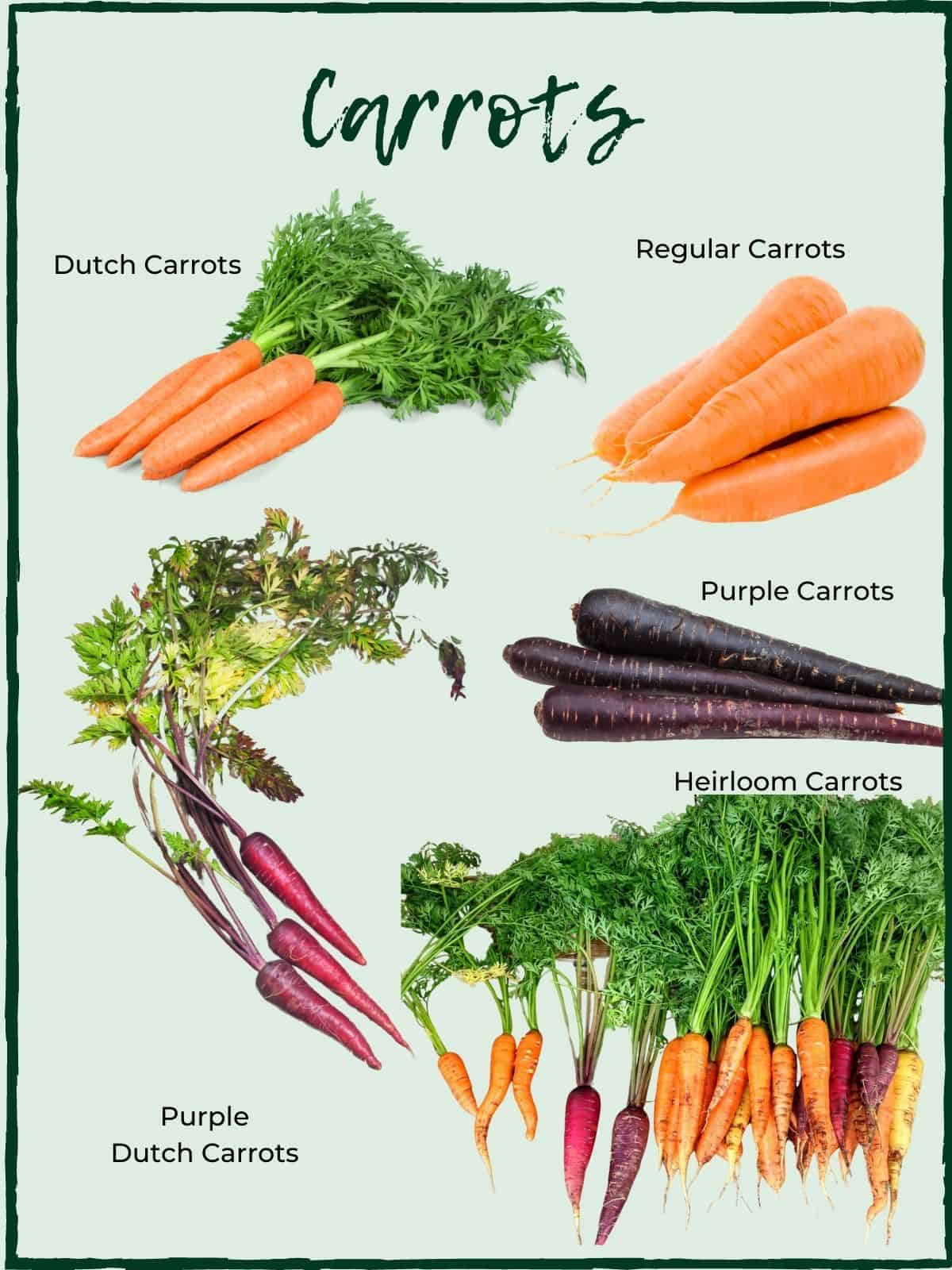 LABELLED CARROT VARIETIES